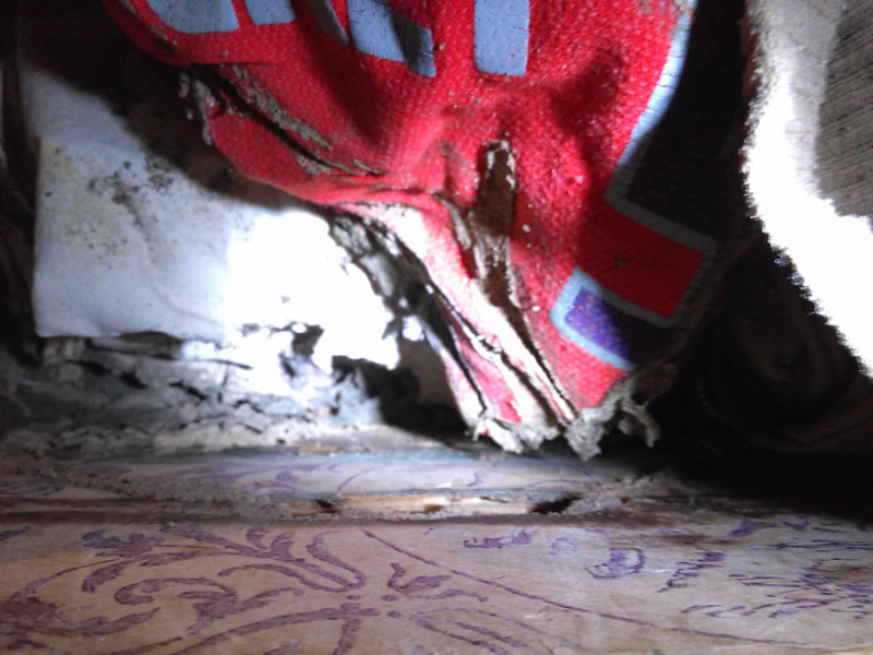 La termita no solo come madera, estas decidieron atacar un baúl lleno de ropa
