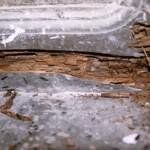 Termitas, aladas en puerta