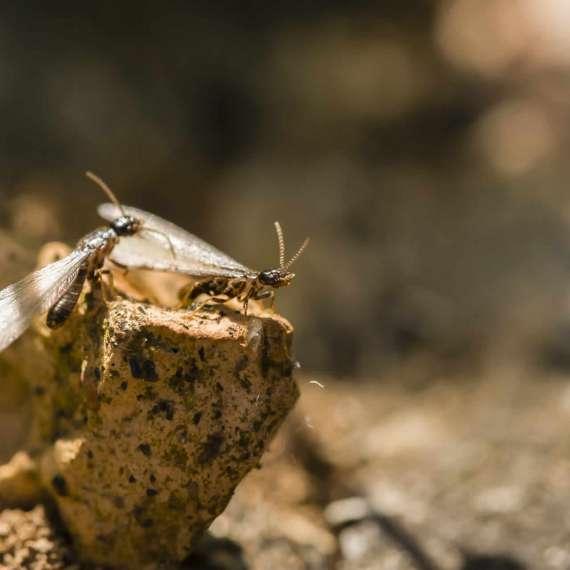 tratamiento termitas madera
