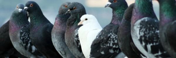 El Ayuntamiento de Ávila y la Junta de Castilla y León colaborarán en el control de aves urbanas