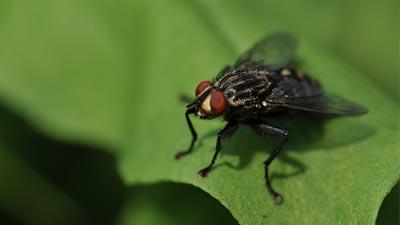 Eliminar plagas de moscas