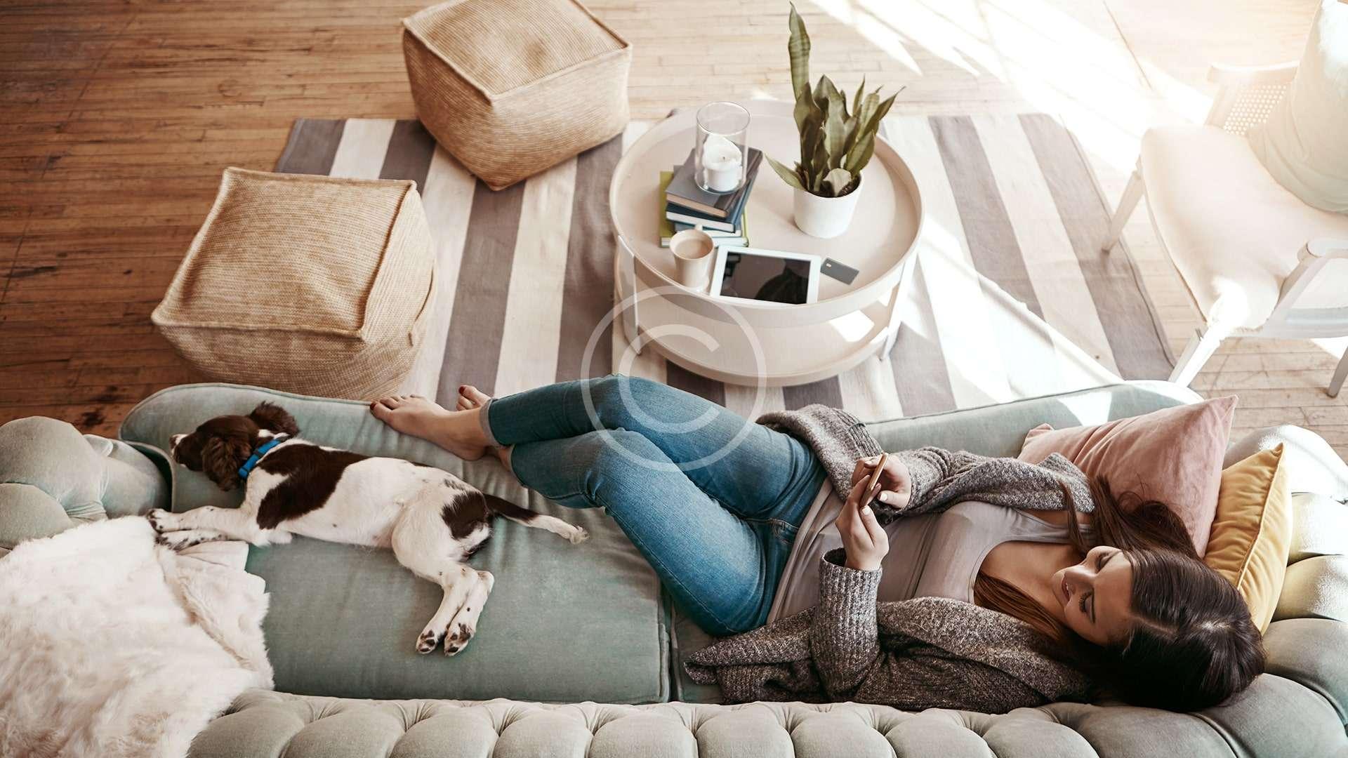 Solución plagas en el hogar
