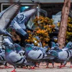 Control de aves ciudad