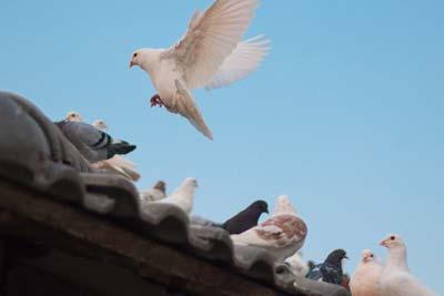 Control y gestión plaga de aves