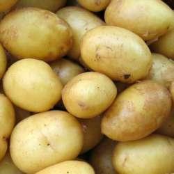 Tratamiento anti germinante patata