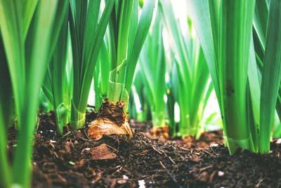 Tratamiento fitosanitario jardines plagas