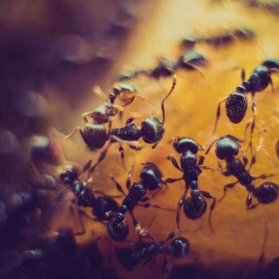 Como evitar hormigas en casa