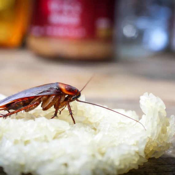 Eliminar cucarachas de la cocina