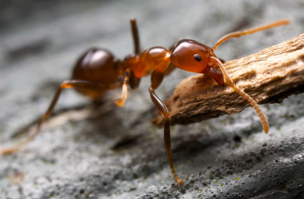 plaga de hormigas en salamanca 1