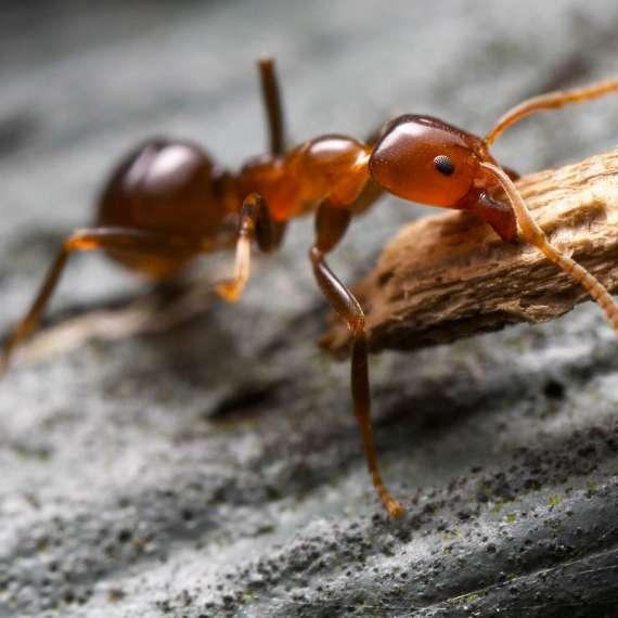 plaga de hormigas en salamanca