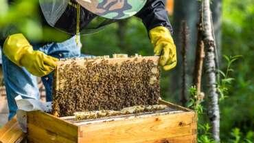 curso apicultura 2021 Salamanca