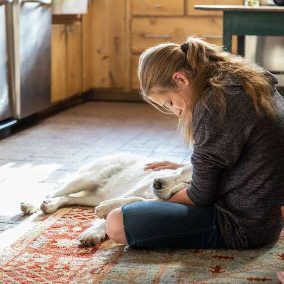 Cómo tratar o prevenir las pulgas en perros